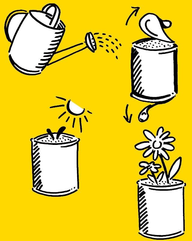 plante dans un pot