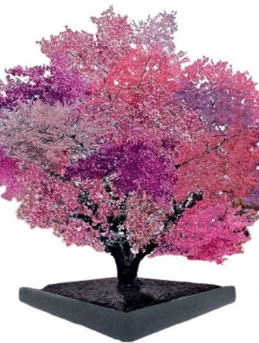 l'arbre aux 40 fruits