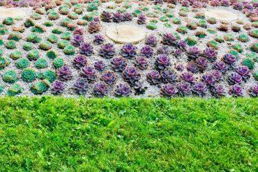 sécheresse plantes