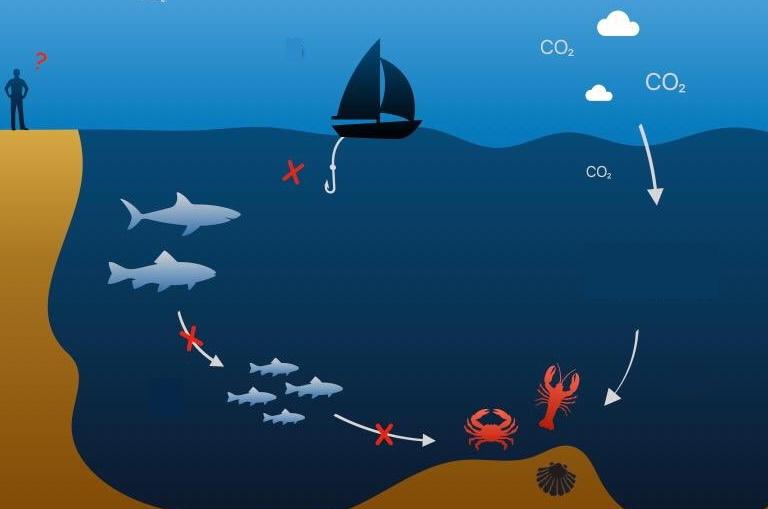 acidification des océans famine